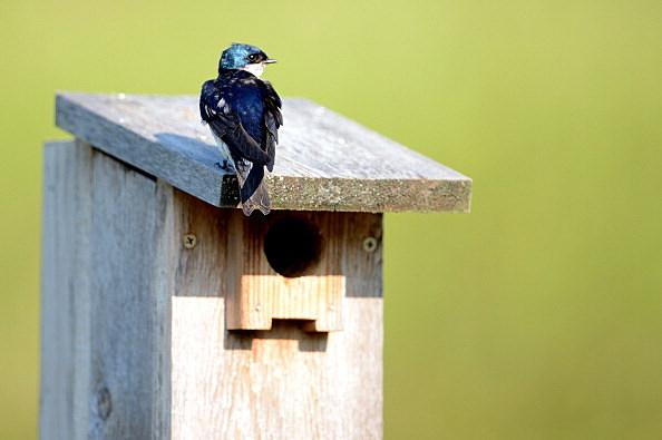 ¿Cuándo es el mejor momento para poner su Birdhouse? [VÍDEO]