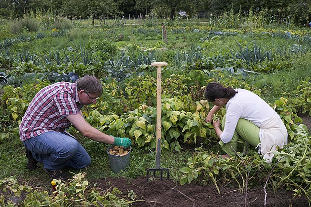 Urban Gardening Growing In Popularity