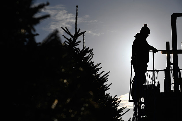 Dumfries Farm Finishes Their Christmas Tree Harvest